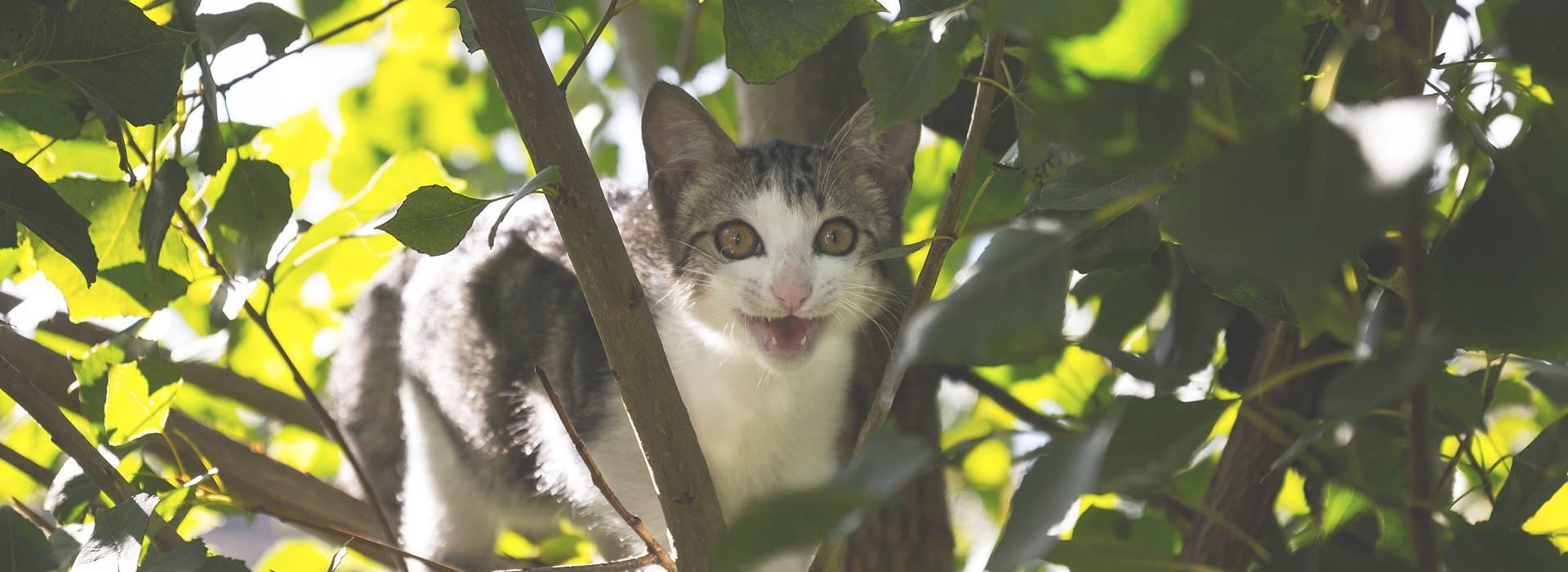 El gato montés, el antecesor del gato doméstico
